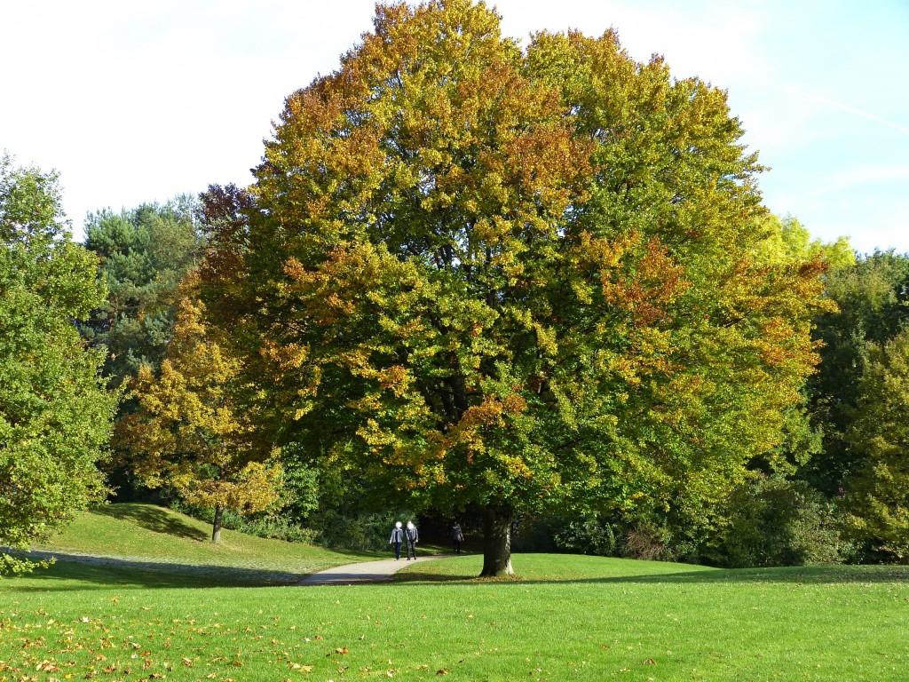 Baum in Ostpark München