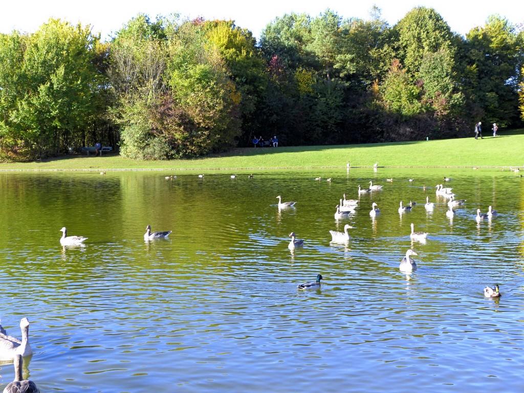 Enten und Gänse in Ostparksee München