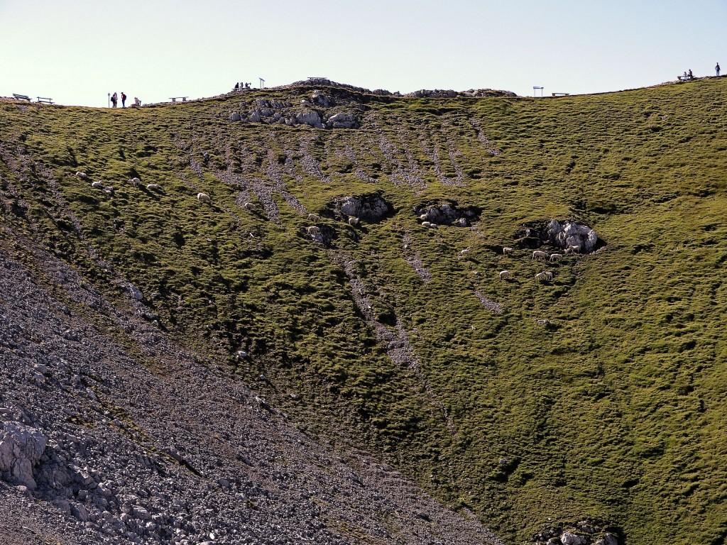 Schafe in der nähe von Karwendel Bergstation