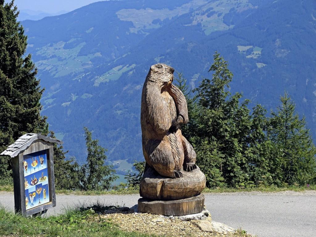 Murmeltierland Zillertal