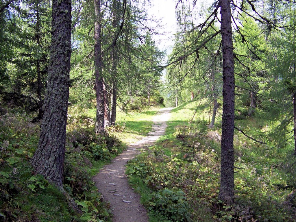 Weg zur Vallming Almen