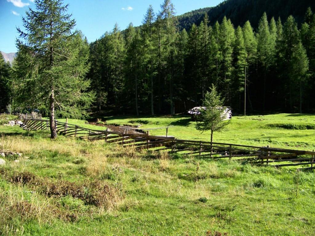 Steinrast in Ultental