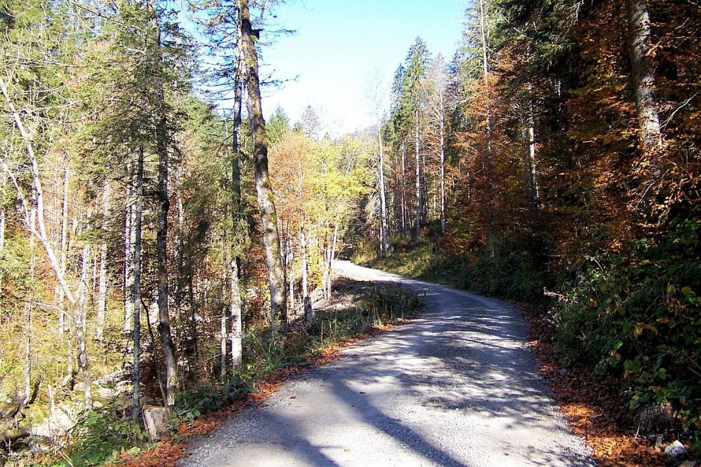 Forstraße in Schwarzenbachtal