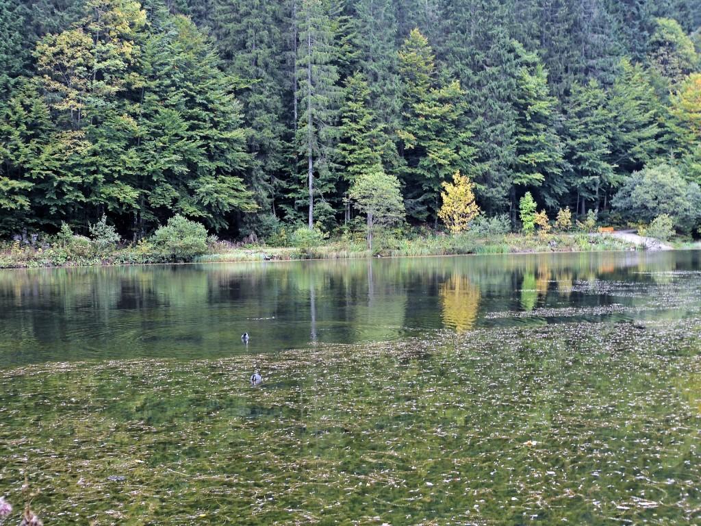 Waldmoorsee in Valepptal