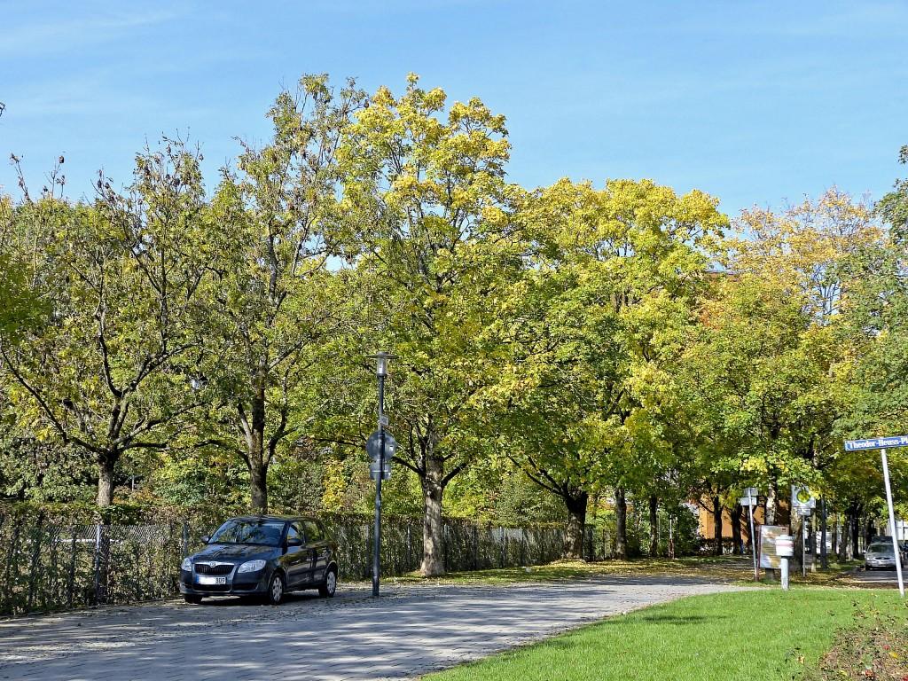 Bäume in Farbenspiel