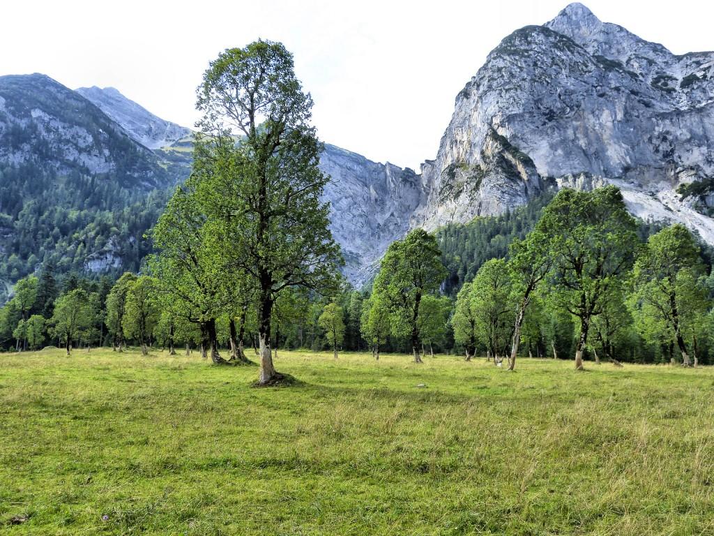 Ahornwald in Risstal Karwendelgebirge