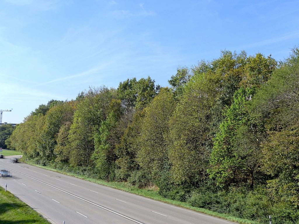 Sträucher und Bäume neben der Straße