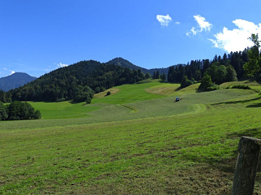 Weidewiese bei Kleinbuch bei Tegernsee